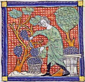 Vendanges_médiévales