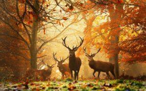fond-ecran-nature-paysages-automne-2013-070